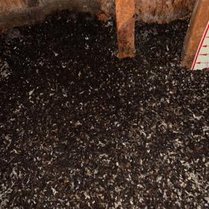 Rochester Hills Bat Control Guano in Attic