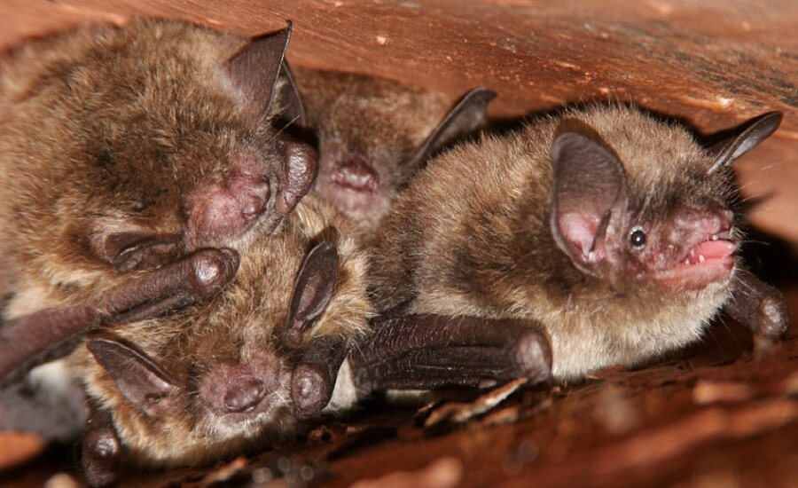 West Bloomfield Township Bat Removal Control