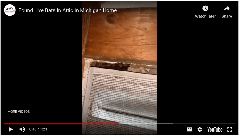 Found Live Bats In Attic In Michigan Home