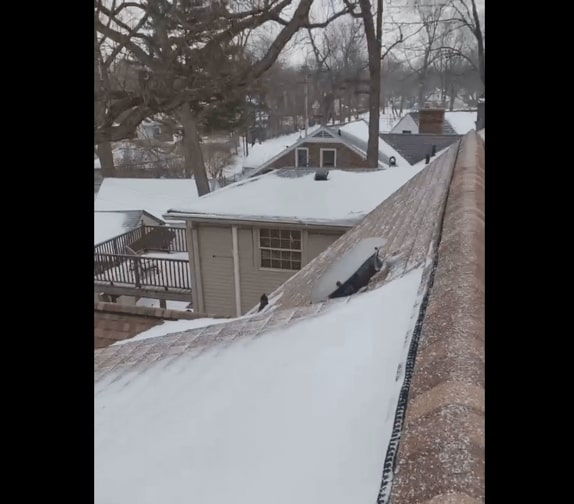 Dealing with Bats in the Winter